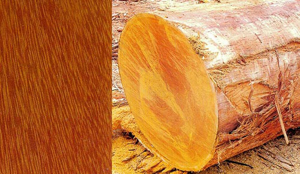 Drvo Tatajube