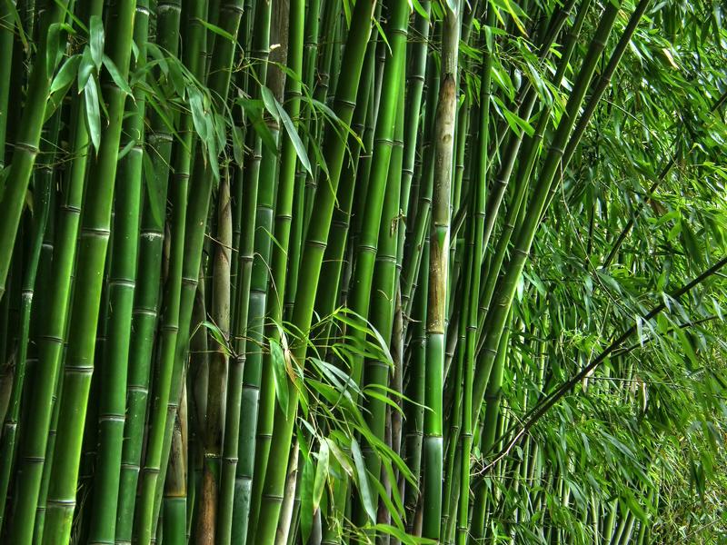 Prirodno obrađena vlakna bambusa i lepak zajedno formiraju vodootporan i izuzetno izdržljiv kompozitni materijal