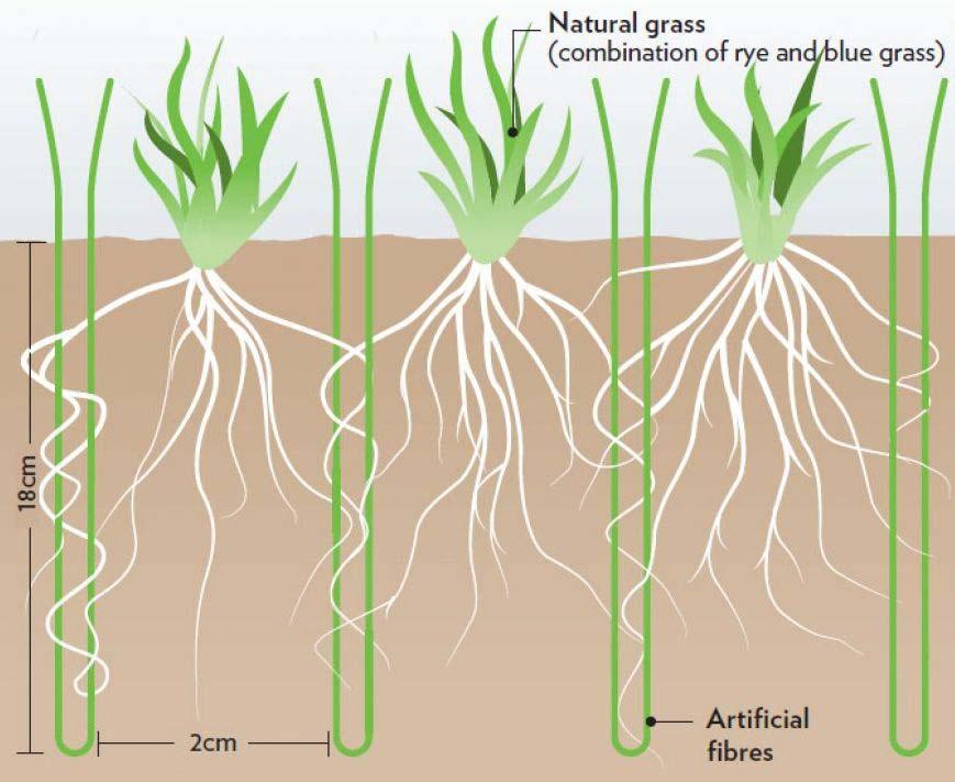 Grass Master hibridna trava za sportske terene