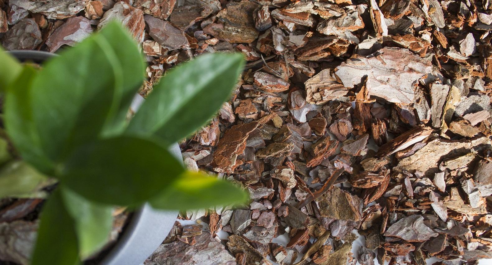 Malč treba postavljati posle sadnje biljaka a pre nicanja korova