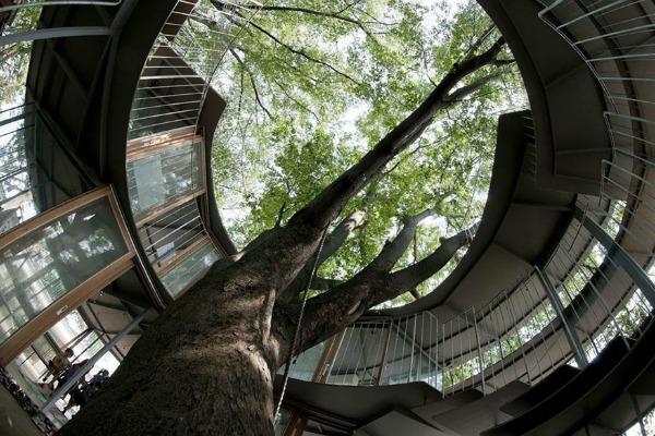 Drvo je samo po sebi istorijska atrakcija