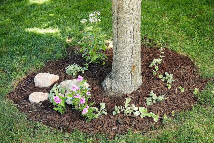 Malč i dekorativni kamen za uređenje prostora oko drveta