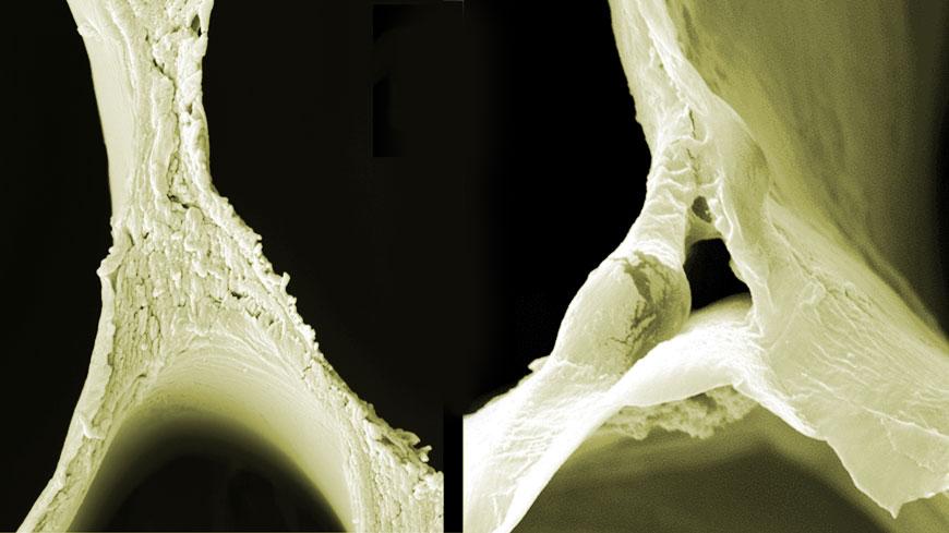 Skenovi načinjeni pomoću elektronskih mikroskopa (SEM) - slika ne tretiranog  drveta (levo) i delignifikovanog drveta (desno) prikazuju strukturalne promene.